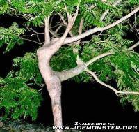 ต้นไม้แปลก !!ไม่ได้ทะลึ่งนะแต่มีจริง