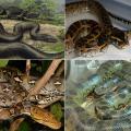 10 อันดับงูที่ใหญ่ที่สุดในโลก