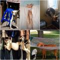 15 ภาพขำ ๆ เมื่อหมา-แมว ทะเลาะกับเฟอร์นิเจอร์