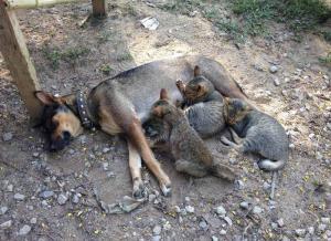 แม่หมาแท้ง-เจอแมวเด็ก 4 ตัว คิดว่าเป็นลูก-ให้นมกินราวกับเป็นแม่แมว!