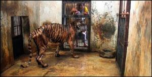 ขุมนรกบนดิน สวนสัตว์ อำมหิต ประเทศอินโดนีเซีย