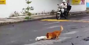 สุดซึ้ง มิตรภาพ ของ หมา ที่ ทำให้ น้ำตาซึม ได้