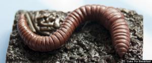 ช๊อคโกแลต แปลก ใหญ่ ทั่วโลก