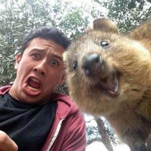 เทรนด์ใหม่ ออสเตรเลีย ถ่าย selfie กับตัว Quokka น่ารักฟรุ้งฟริ้งสุดๆ