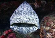 ปลาเค็ม